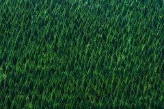 Hintergrund des Waldes mit Baummuster Lizenzfreie Stockfotografie