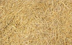Hintergrund des Weizenheus Lizenzfreie Stockbilder