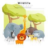 Hintergrund des wilden Tieres Stockbild