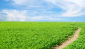 Hintergrund - ein Kraut, der Himmel, Weg. Lizenzfreie Stockbilder