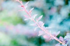 Hintergrund einer grünen Landschaftsabstraktion der Blumen auf einem Baum an einem warmen Sommertag Stockbild