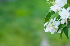 Hintergrund einer grünen Landschaftsabstraktion der Blumen auf einem Baum an einem warmen Sommertag Stockfotos