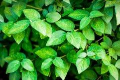 Hintergrund einer grünen Landschaftsabstraktion der Blumen auf einem Baum an einem warmen Sommertag Stockbilder