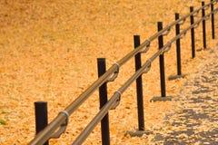Hintergrund einer Straße mit gelbem gefallenem Ginkgo verlässt Stockfotos