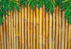 Hintergrund eines Bambuszauns mit Bambusblättern Stockfotografie