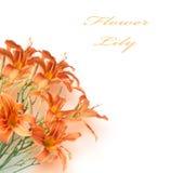 Hintergrund eines Blumenstraußes Lizenzfreies Stockfoto