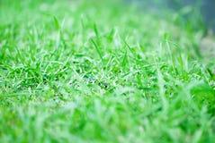 Hintergrund eines grünen Grases Lizenzfreies Stockbild