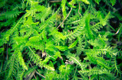 Hintergrund eines grünen Grases Lizenzfreie Stockbilder