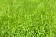 Hintergrund erntete ein grünes Gras Lizenzfreies Stockfoto