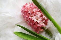Hintergrund für eine Grußkarte: rosafarbene Blume auf Gefieder Lizenzfreies Stockfoto