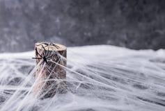 Hintergrund für Halloween Spinne ` s Netz und Spinnen Lizenzfreies Stockfoto