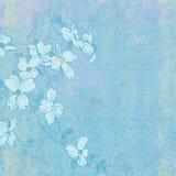 Hintergrund-Frühlings-Blüten Lizenzfreies Stockbild