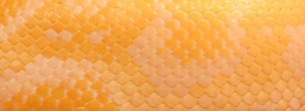 Hintergrund gemacht durch die Haut des Hellen Tigerpythons Lizenzfreies Stockfoto