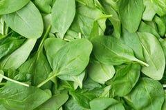 Hintergrund gemacht vom Spinat Stockfoto