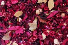 Hintergrund: Getrocknete Blumen Stockbild