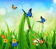 Hintergrund-grünes Gras mit Schmetterling Stockbilder