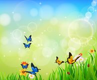 Hintergrund-grünes Gras mit Schmetterling Stockfotografie