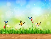 Hintergrund-grünes Gras mit Schmetterling Stockfoto
