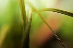 Hintergrund - Gras Lizenzfreies Stockbild