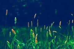 Hintergrund-Graswald der Tapete grüner Lizenzfreies Stockbild