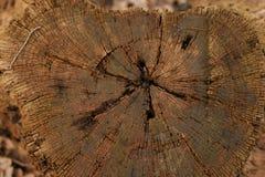 Hintergrund, hölzerne Barke, Baumstumpf Lizenzfreie Stockfotos