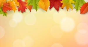 Hintergrund - Herbstlaub - Laub Stockbild