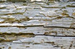 Hintergrund Käfer-gegessener Käfer Lizenzfreie Stockfotografie