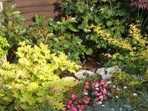 Hintergrund-Laub-Mischungs-kleine Garten-Grenze Stockfoto