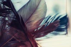 Hintergrund mit Adlerfedern Stockfotos