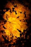 Hintergrund mit Ahornblättern Stockfotografie