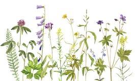 Hintergrund mit Aquarellblumen Stockfoto
