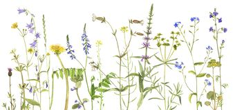Hintergrund mit Aquarellblumen Stockfotografie