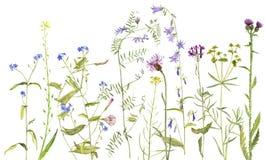 Hintergrund mit Aquarellblumen Lizenzfreies Stockbild