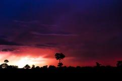 Hintergrund mit Baumschattenbildern auf einem Sturmkommen Lizenzfreie Stockfotos
