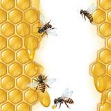 Hintergrund mit Bienen Lizenzfreies Stockbild