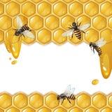 Hintergrund mit Bienen und Bienenwabe Stockfotos