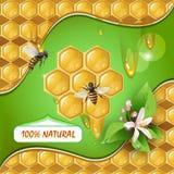Hintergrund mit Bienen und Bienenwabe vektor abbildung