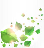Hintergrund mit Blättern Stockfotos