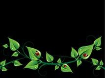 Hintergrund mit Blättern Stockfotografie
