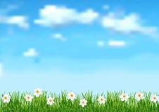 Hintergrund mit blauem Himmel, weiße Wolken beenden weiße Blumen auf gree Lizenzfreie Stockfotos