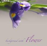 Hintergrund mit Blendenblume Lizenzfreies Stockbild