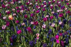 Hintergrund mit Blumen von verschiedenen Farben würzen im Frühjahr Lizenzfreie Stockfotos