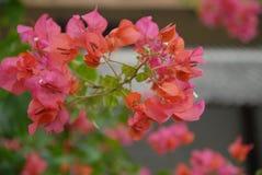 Hintergrund mit Blumenartnatur Lizenzfreie Stockbilder