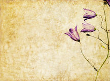 Hintergrund mit Blumenelementen Stockfoto