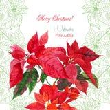 Hintergrund mit Blumenstrauß der roten Poinsettias Lizenzfreie Stockbilder