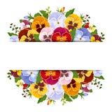 Hintergrund mit bunten Stiefmütterchenblumen Vektor EPS-10