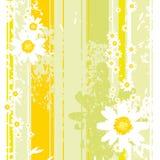 Hintergrund mit camomiles Lizenzfreies Stockbild
