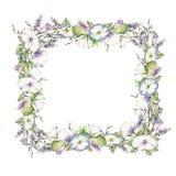 Hintergrund mit dem Aquarell, das wilde Blumen, runden Blumenrahmen, Kranz mit gemalten Feldanlagen, Kräutergrenze zeichnet Lizenzfreies Stockfoto