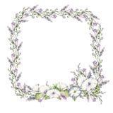 Hintergrund mit dem Aquarell, das wilde Blumen, runden Blumenrahmen, Kranz mit gemalten Feldanlagen, Kräutergrenze zeichnet Lizenzfreie Stockfotografie