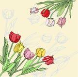 Hintergrund mit den rosa, roten und gelben Tulpen vektor abbildung